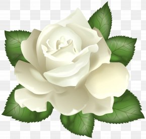 White Rose Transparent Clip Art Picture - Rose White Flower Clip Art PNG