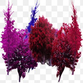 Color Garden Trees In Kind - Tree Garden Computer File PNG