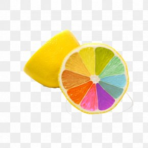 Creative Color Lemon - Color Orange Lemon Grapefruit PNG