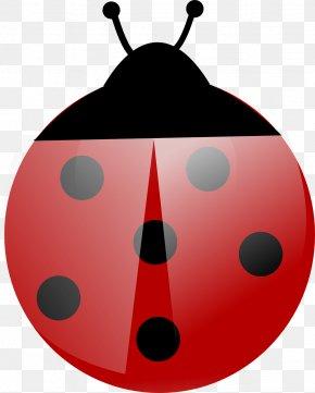 Ladybug - Beetle Ladybird Clip Art PNG
