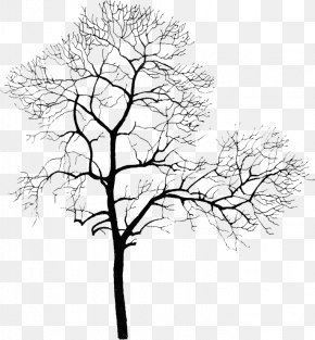 Withered Tree Park - Tree Computer File PNG