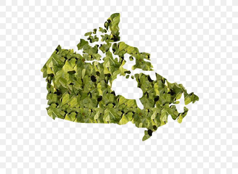 Canada United States Vector Map, PNG, 600x600px, Canada ...