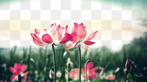 Lotus Sunset - Tongue Cancer Mouth Neoplasm Aphthous Stomatitis PNG