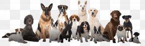 Dog Husky - Puppy Dog Training Dog Breed Pet Cat PNG