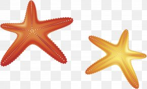 Starfish Vector Material - Starfish Euclidean Vector Computer File PNG