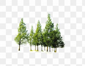 Forest Trees - Tree Forest Computer File PNG