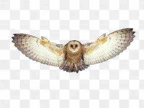 Owl - Owl Bird Flight Bird Flight PNG