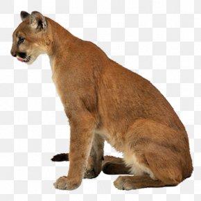 Leopard - Lion Leopard Tiger Felidae Liger PNG