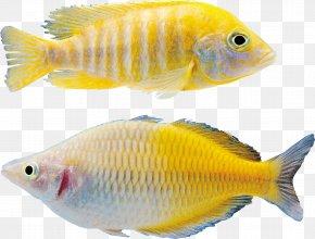 Fish - Goldfish Icon PNG