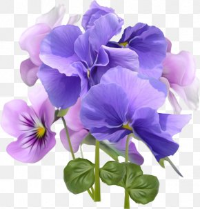 Blue And Purple Morning Glory - Flower Violet Desktop Wallpaper Purple PNG