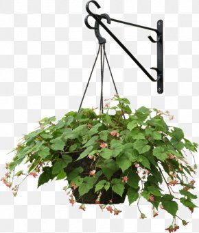 Hanging Basket tree - Plants Hanging Basket Clip Art Tree PNG