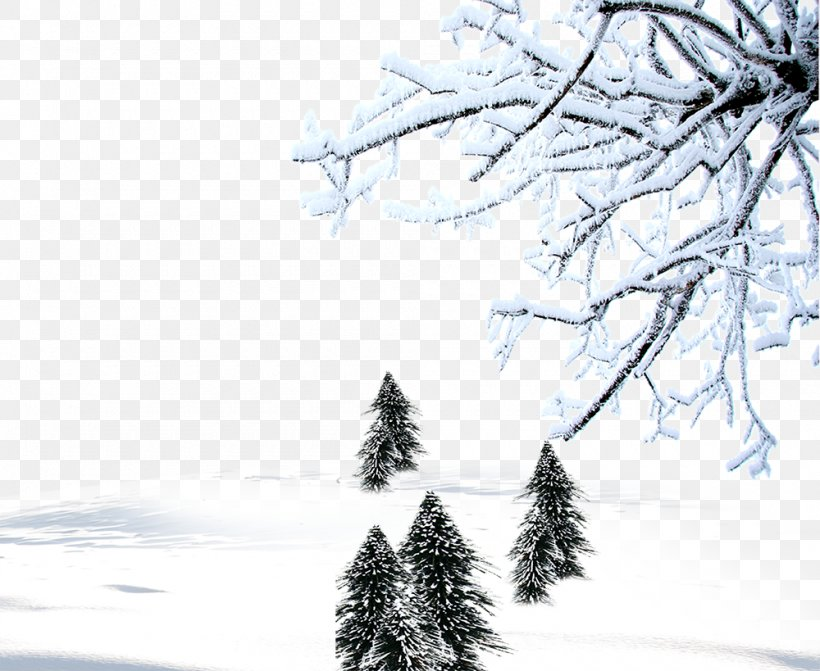 Winter Snow Download Computer File, PNG, 1000x819px, Snow, Aspect Ratio, Black And White, Branch, Christmas Tree Download Free