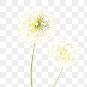 White Dandelion - Common Dandelion White Resource PNG