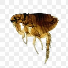 Flea - Cat Flea Dog Flea Cat Flea PNG