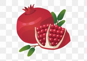 Vector Pomegranate - Pomegranate Royalty-free Food Icon PNG