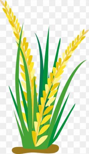 Cartoon Rice Ears - Rice Cartoon Oat Clip Art PNG
