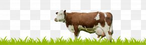 Milk - Holstein Friesian Cattle Milk Dairy Cattle Calf PNG