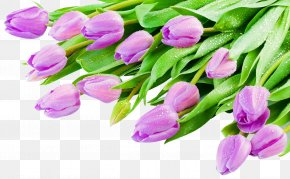 Beautiful Purple Tulip Flowers - Indira Gandhi Memorial Tulip Garden PNG