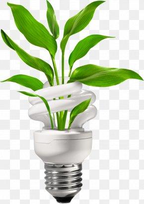 Energy-saving Light Bulbs - Incandescent Light Bulb Energy Conservation Compact Fluorescent Lamp PNG