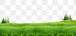 Green Grass Background Free Of Material - Download Lawn Gratis Wallpaper PNG