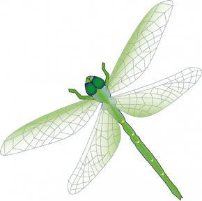 Dragonfly Outline - Dragonfly Clip Art PNG