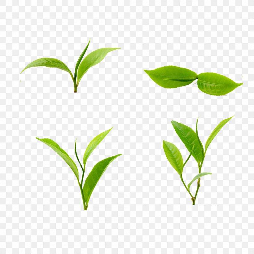 Tea Green Leaf Food, PNG, 1000x1000px, Tea, Branch, Food, Grass, Green Download Free