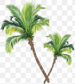 Coconut Tree Vector Material - Asian Palmyra Palm Coconut Tree Euclidean Vector PNG