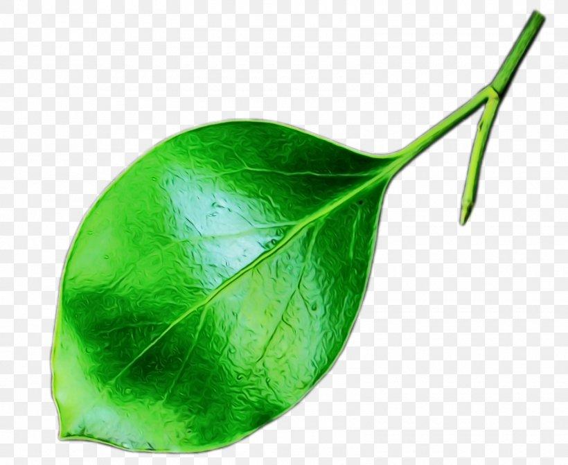 Leaf Green Plant Flower Anthurium, PNG, 1600x1310px, Watercolor, Anthurium, Flower, Green, Leaf Download Free
