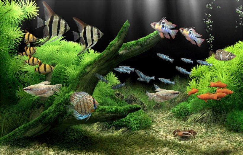 Dream Aquarium Screensaver Desktop Wallpaper Aquariums Png 1771x1136px Dream Aquarium Akwarystyka Morska Aquarium Aquariums Aquatic Plant
